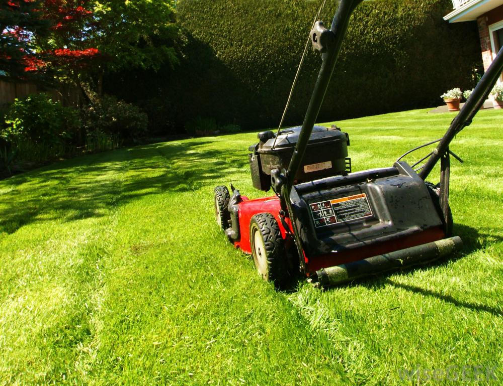 5 Reasons Why Your Lawn Mower Might Not Be Working The