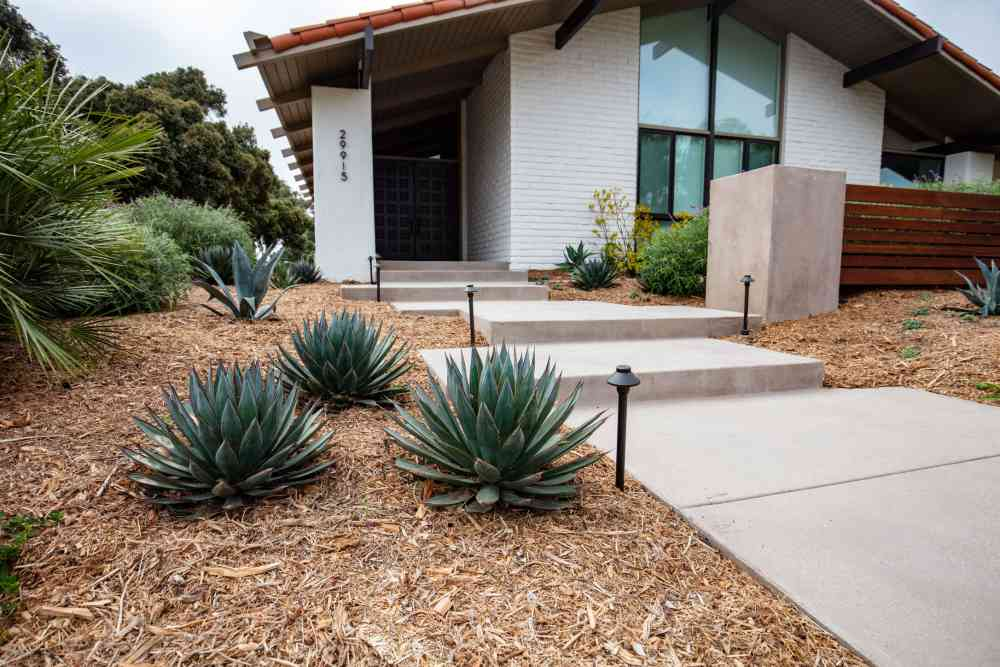Drought tolerant plants in Southern California